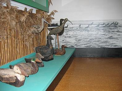Lokvogels van de strandjager © copyright dutchmarco