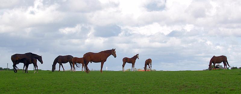 Paarden in de wei © copyright dutchmarco