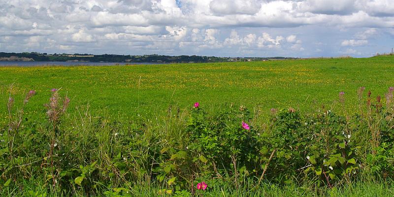 Veel bloemen in het landschap © copyright dutchmarco