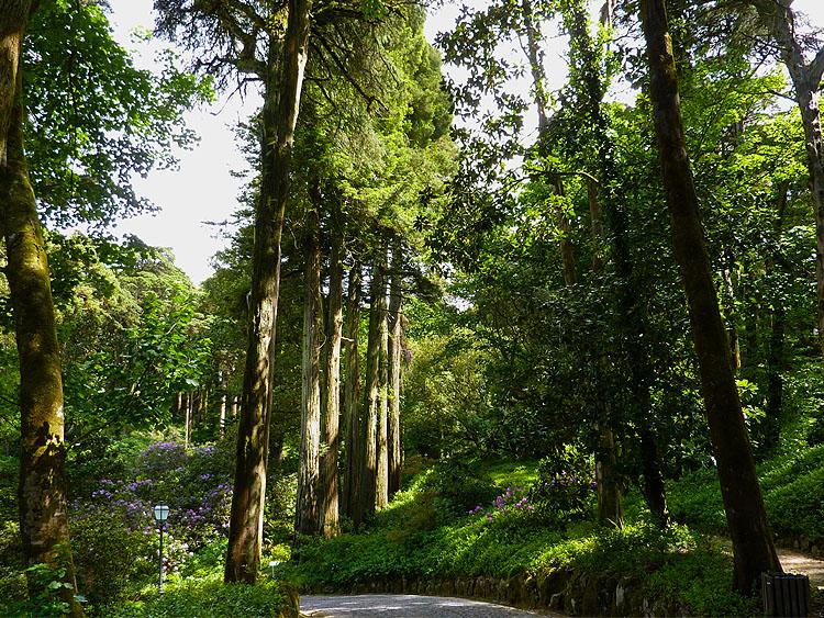 Midden op de foto een groep sequoia's © copyright Dutchmarco