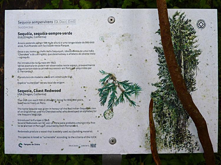 Sequoia-info © copyright Dutchmarco